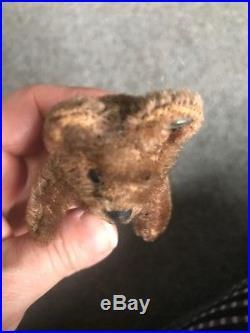 RARE C Early 1900s Miniature Steiff Teddy Bear DK BROWN Mohair 3.75 FF Button