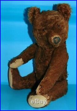 RARE exceptional antique early Steiff chocolate/ brown TEDDY BEAR. 21 inches