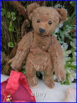 Rare 8 early cinny Steiff bear Ruby