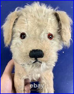 Rare Antique Early SWEET Steiff MOLLY Terrier Dog On Wheels Pull Toy