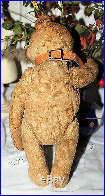 Rare early 1900 Sweet Steiff Teddy Bear with his pre war Button 12 tall