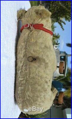 Very Rare Early Antique Steiff Bear 17 Wooden Wheels Long F Underscored Button